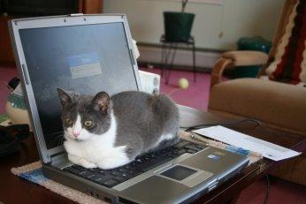 Cat-top