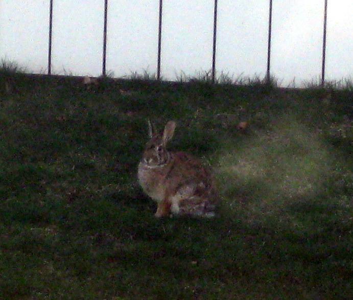 Bunny Day!